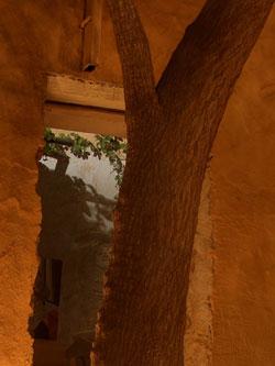 Synagogue_tree