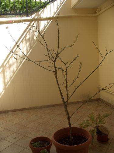 20080322_tree