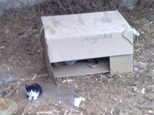 Abandoned kittens in Greece