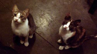 Irakliohungrycats